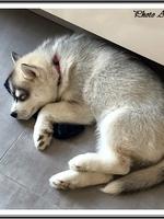 Siya (2 mois), chez ses nouveaux propriétaires