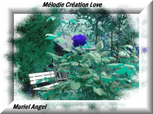 Creation-Dream-fleur-poetique-110-melodie--creation-love.JPG