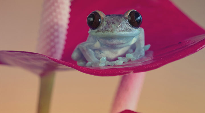 grenouille-animal-photo-macro40