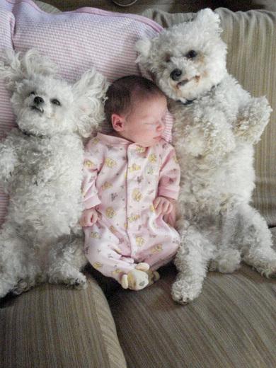 Des Photos humoristiques d'animaux
