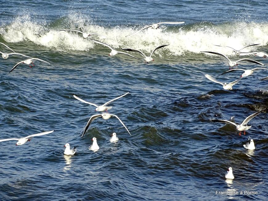 Oiseaux du littoral de la côte de Jade - 2019