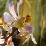 Le monde merveilleux des orchidées...