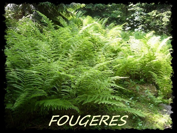 fougeres 269