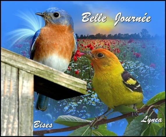 """Résultat de recherche d'images pour """"Bonne journée oiseaux"""""""