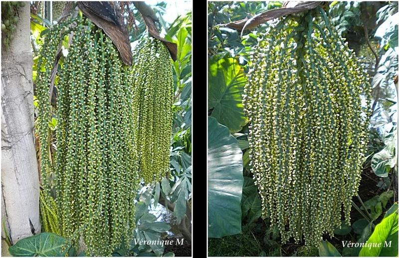 Les Serres d'Auteuil : Quelques plantes insolites et originales ...