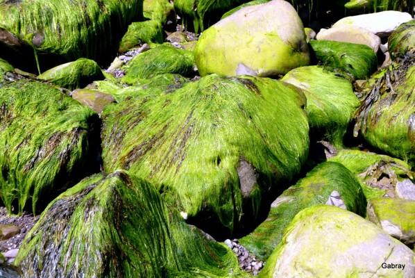 i04---Tout-vert.JPG