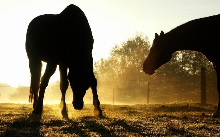 Photos sur les animaux: