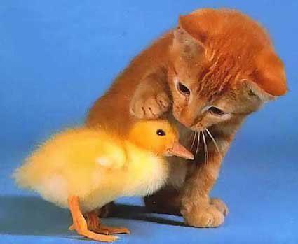 LUTTONS CONTRE LA MALTRAITANCE ANIMALE.
