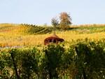 O outono na Alsácia