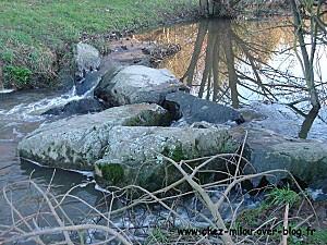 forêt janvier 201106