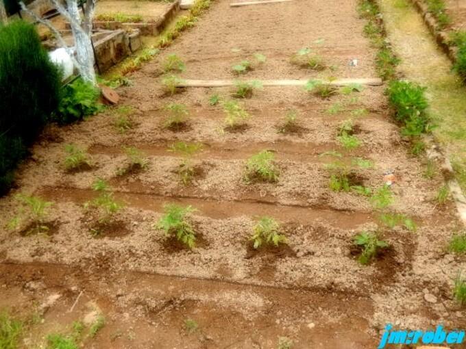 Un petit tour au potager et jardin
