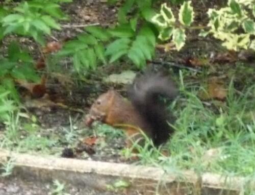Un écureuil...deux écureuils ?