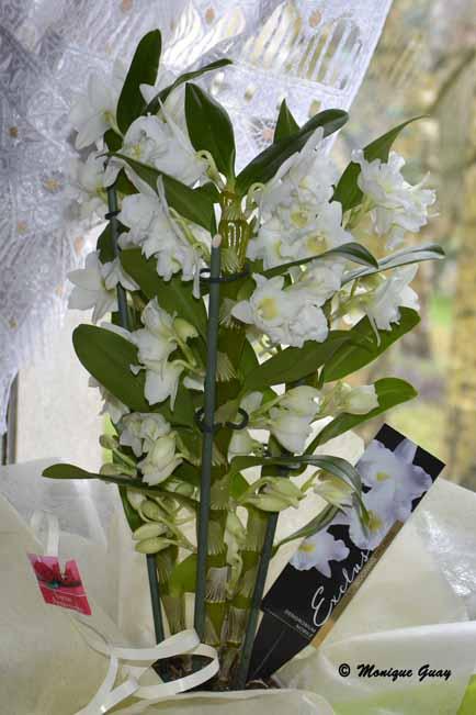 Orchidée et fleur exotique