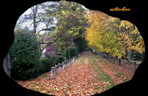 un défi 2013 : l'automne et pour cela je vous ai trouvé en plus un freebie sympa  pour faire votre création