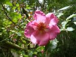 Quelques floraisons de juin