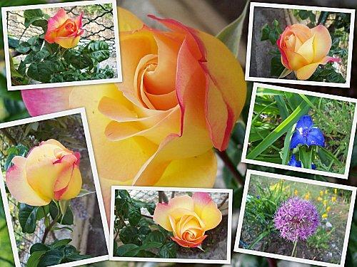 jardin 8 mai
