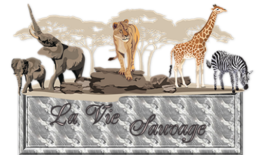 Des Animaux à Gogo