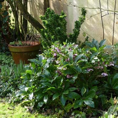 Février dans le petit jardin...
