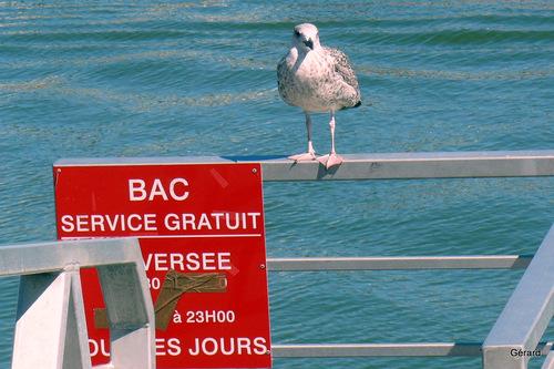 Des oiseaux : à voir !