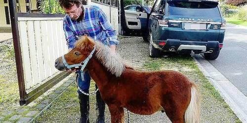 Le petit cheval sauvé une 2e fois grâce à Facebook