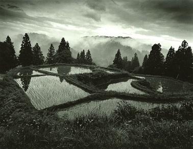 """Il était une fois """"la culture du riz au Japon"""" ..."""