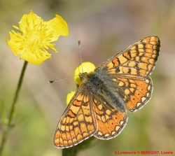 Lepidoptères2