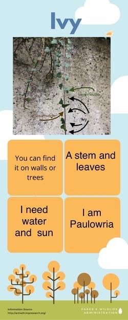 projet SVT /Anglais : la biodiversité dans le collège