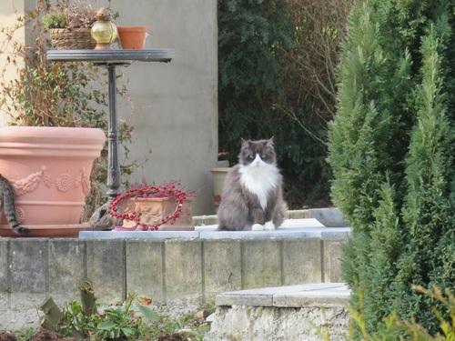 Bonjour, c'est le printemps, nom d'un chat!