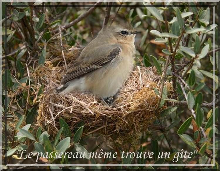 """La pensée du Jour : """" Les Oiseaux """""""