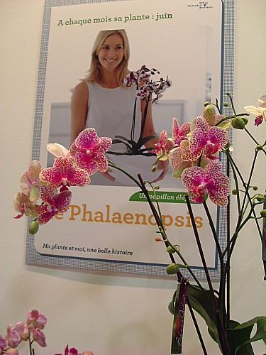 Orchidées 034