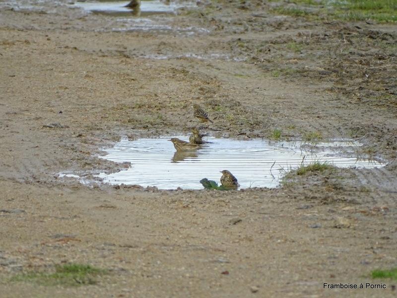 Oiseaux au Port du Collet - Moutiers en retz
