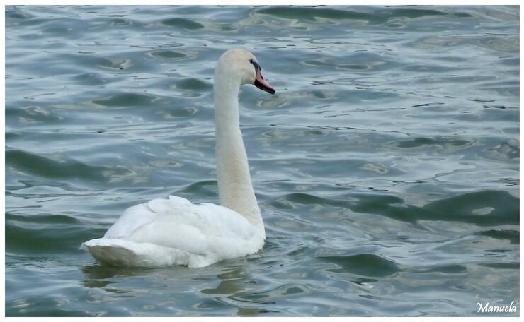 Balade auutour du lac de Vesoul - Vaivre