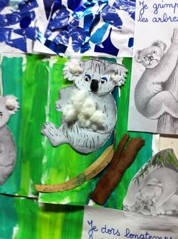 Les koalas et l'eucalyptus des PS de C.