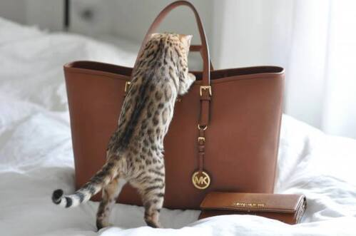 adorable, bag, beautiful, cat, cute, fashion, michael kors, mk, pet, style, wallet