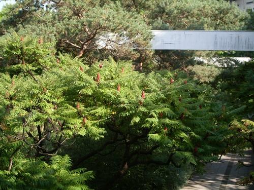 Le jardin des iris et des pavots (jardin noir)