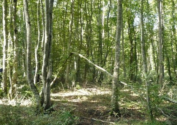 Un circuit dans les bois près de Primelles