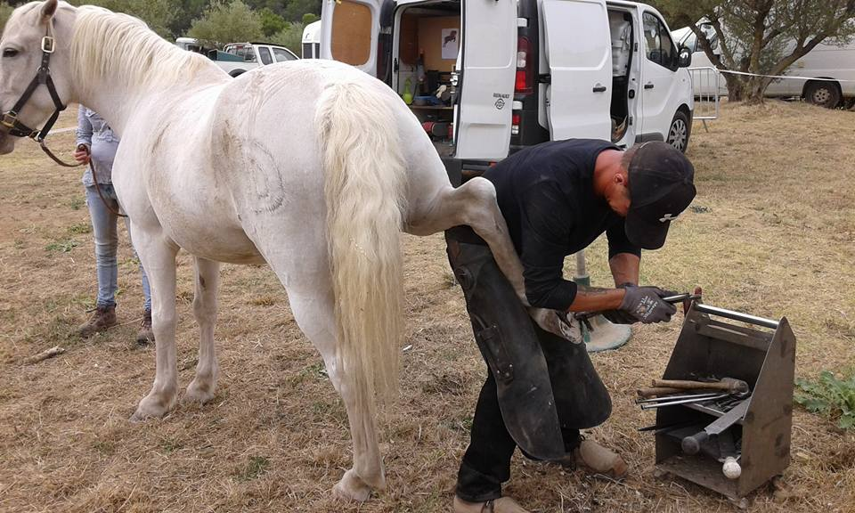 L'image contient peut-être: une personne ou plus, cheval et plein air