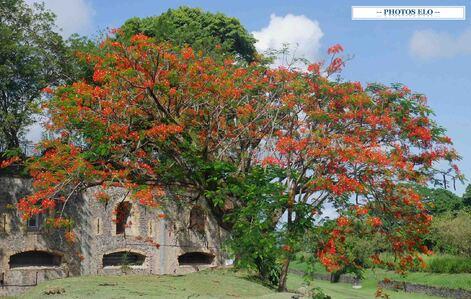Le Flamboyant Les Mieldimama En Martinique