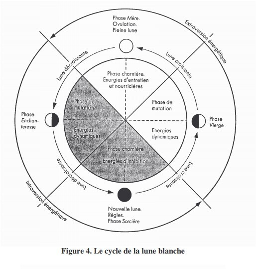 Les 4 phases du cycle mesntruel