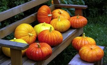 Agréable mois d'octobre !