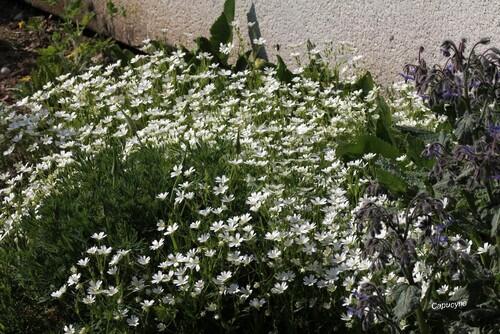 Petits plaisirs jardiniers