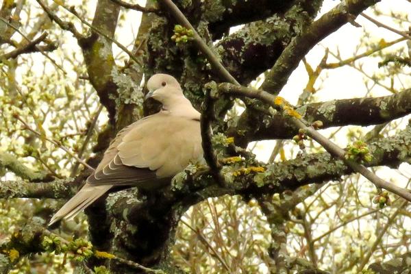 D'autres oiseaux ont fréquenté mon jardin cet hiver, d'autres sont arrivés au printemps....