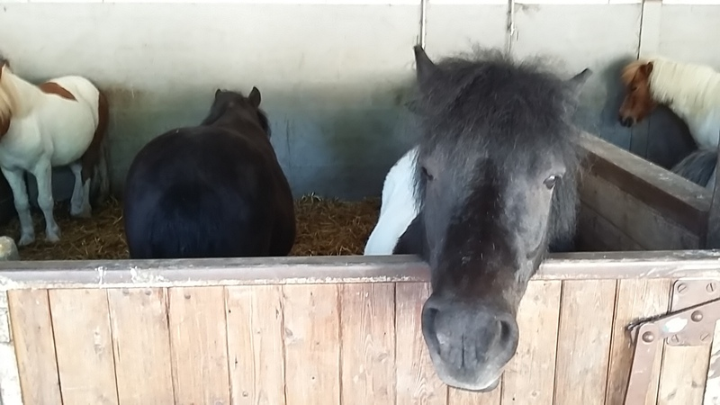 bon dimanche à tous  - les poney suite et fin Marolles en brie