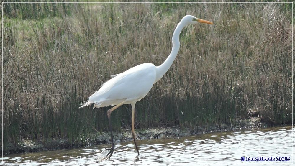 Réserve ornithologique du Teich (mars 2015) - 6/8