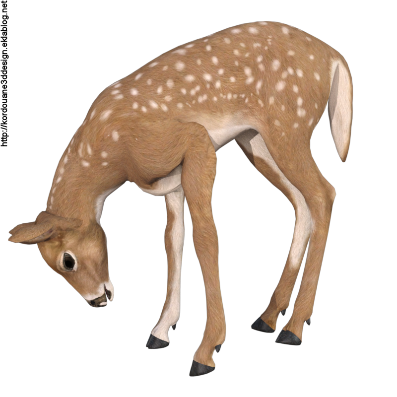 Image de biche (tube-render-animal)
