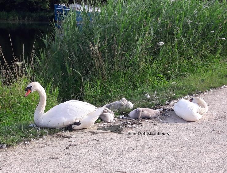 Une famille en balade...