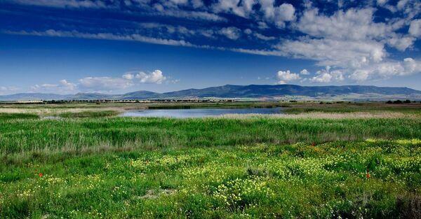 Les prairies font partie des biomes qui souffriraient le plus des activités humaines. Ici, une prairie dans le Parc national des Tablas de Daimiel, en Espagne. © yannboix, Flickr, CC by 2.0