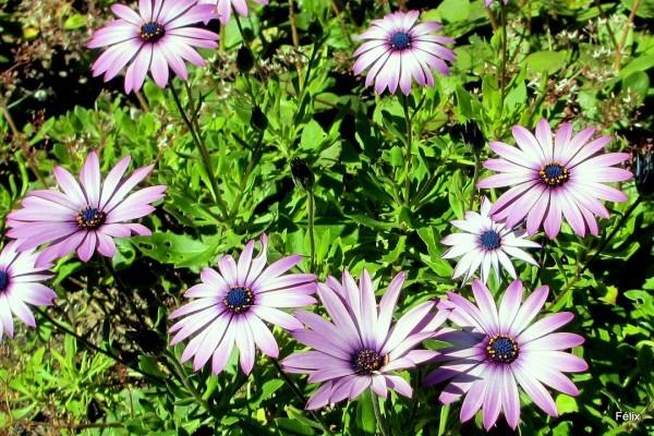 m05---Fleurs.JPG