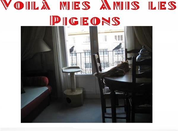 Mes amis ....les pigeons