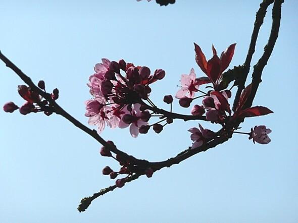 fleurs.21.03.11--7-.JPG